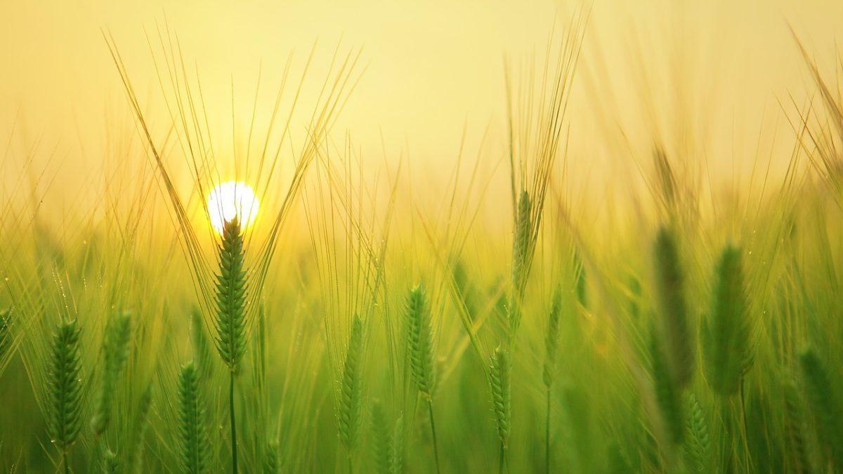 Agricalypse: in 50 anni triplicati i danni all'agricoltura da siccità e calore