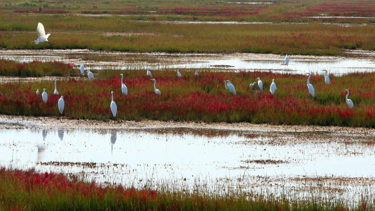 Servizi ecosistemici: la minaccia delle estinzioni a cascata