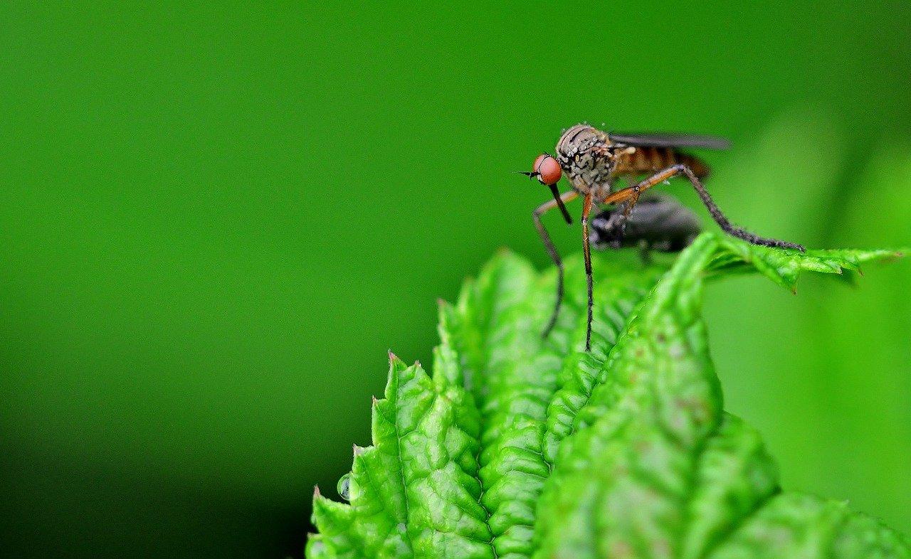 Lotta agli insetti nocivi