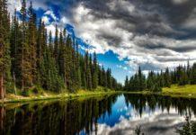 Cambiamenti climatici: a rischio metà delle foreste europee