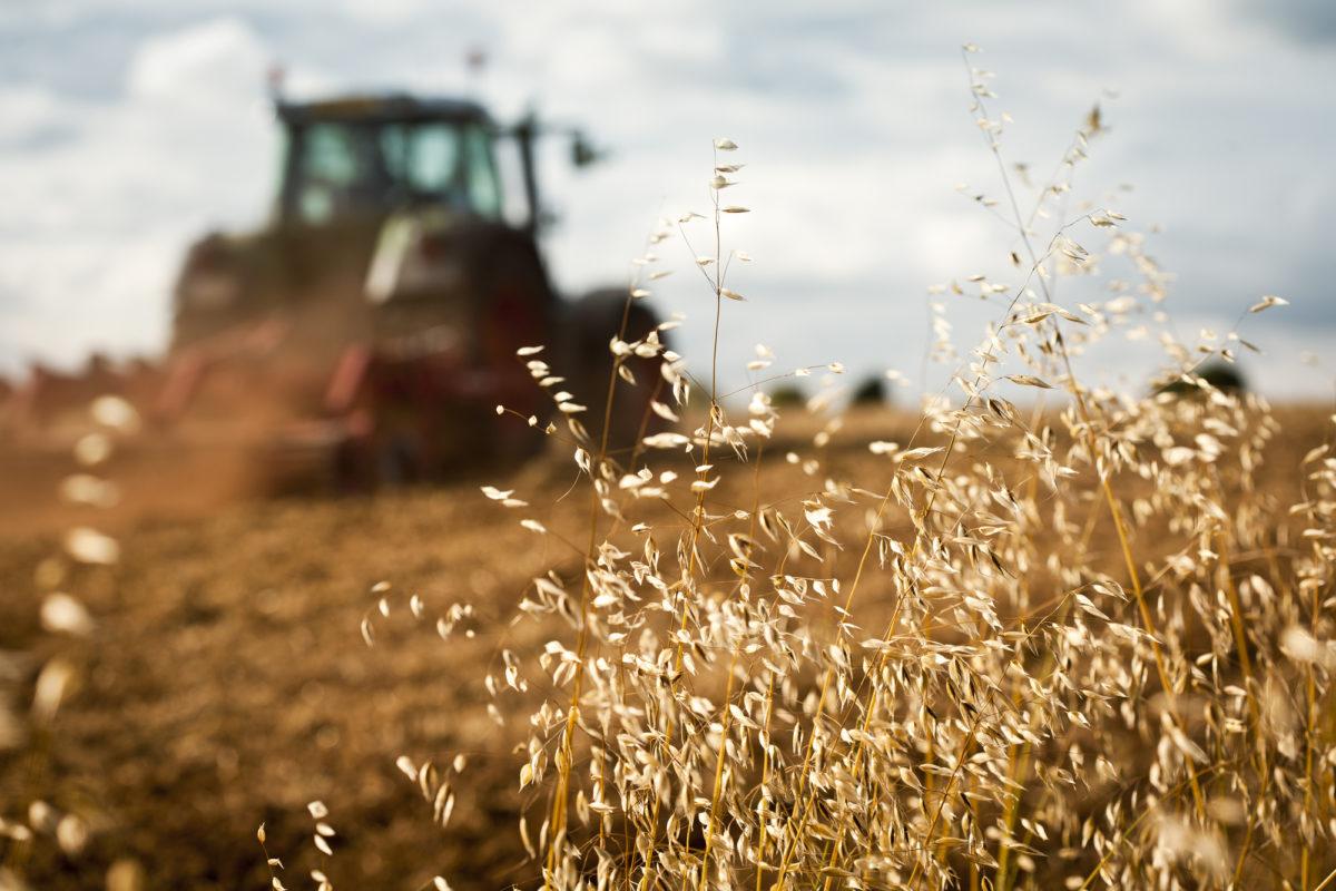futuro dell'agricoltura