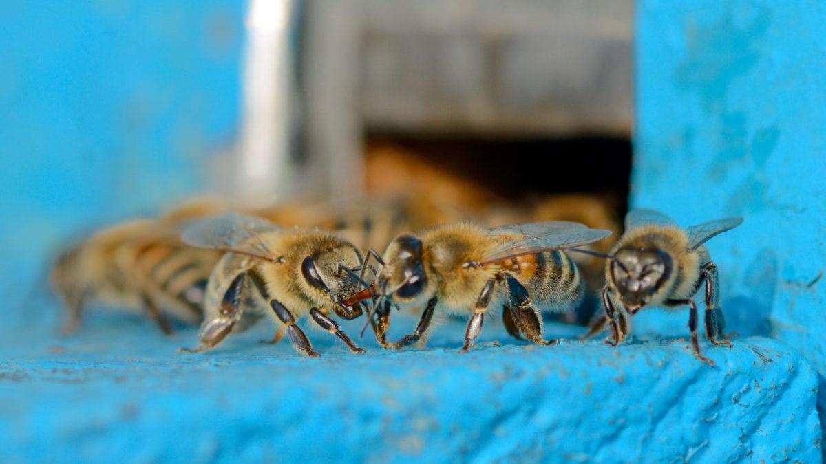 Pesticidi: ne usiamo di meno ma sono più letali di prima