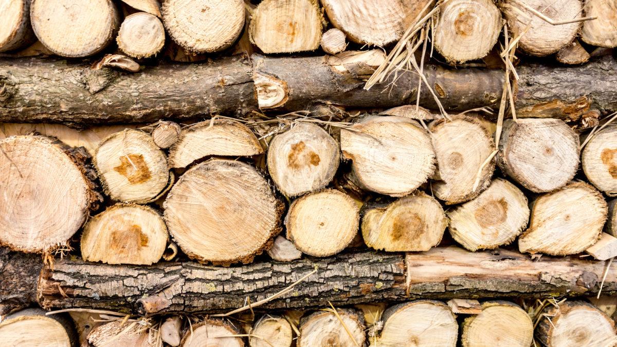 Deforestazione: Italia tra le peggiori in Europa