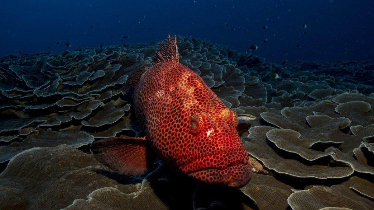 Pesca sostenibile minacciata da inquinamento chimico e microplastiche