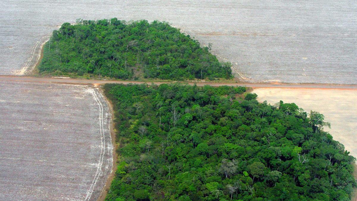 Disboscamento dell'Amazzonia: nuova legge aumenterà la deforestazione