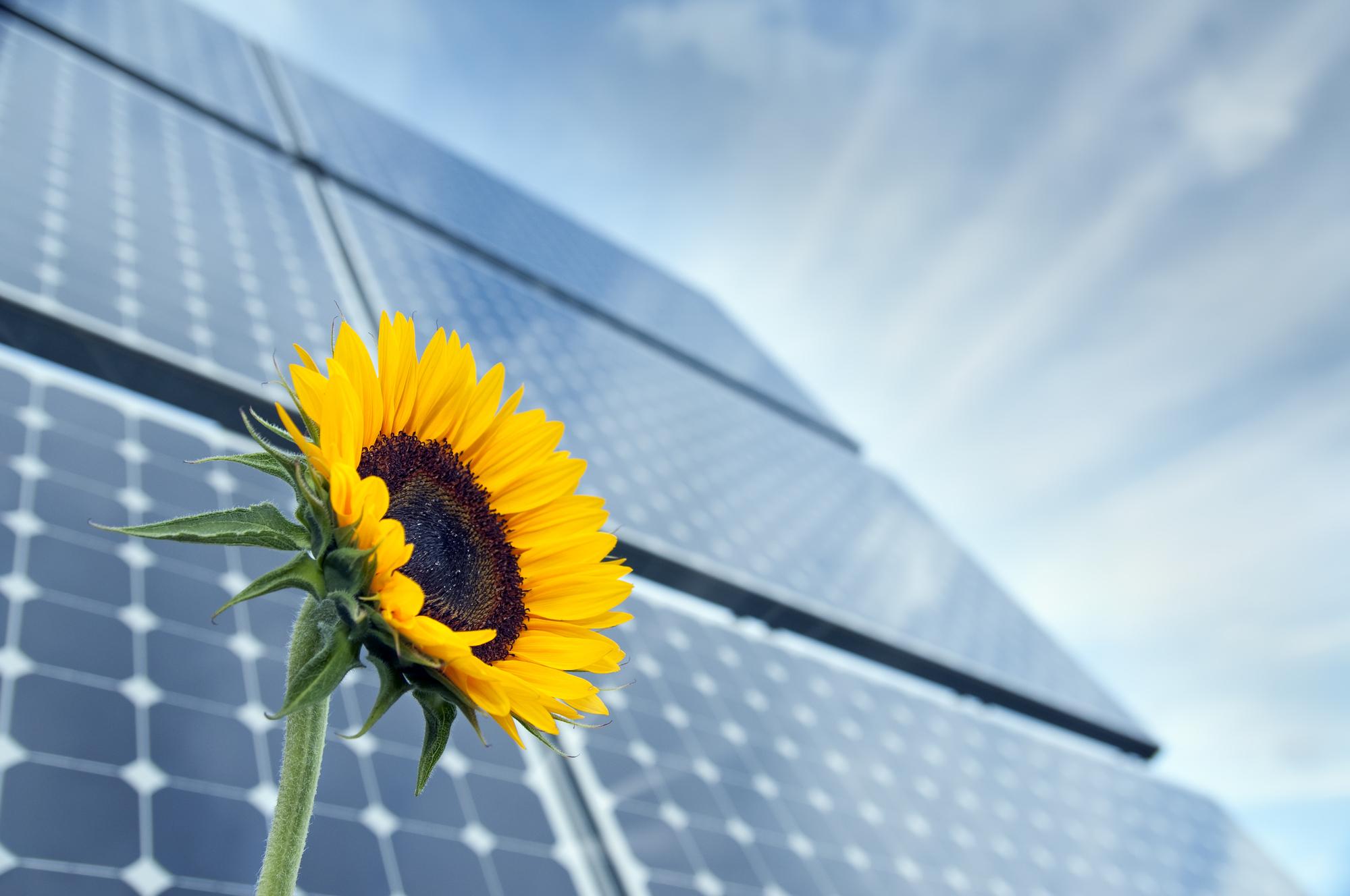 agrivoltaico sostenibile