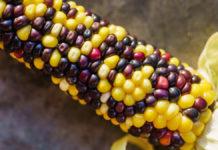 Nuovi OGM: l'UE apre al gene-editing ma ignora la scienza