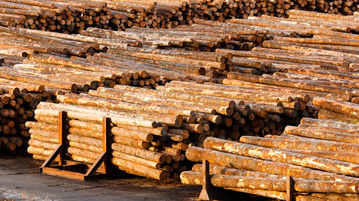 Disboscamento illegale: l'agricoltura commerciale guida la deforestazione nel mondo
