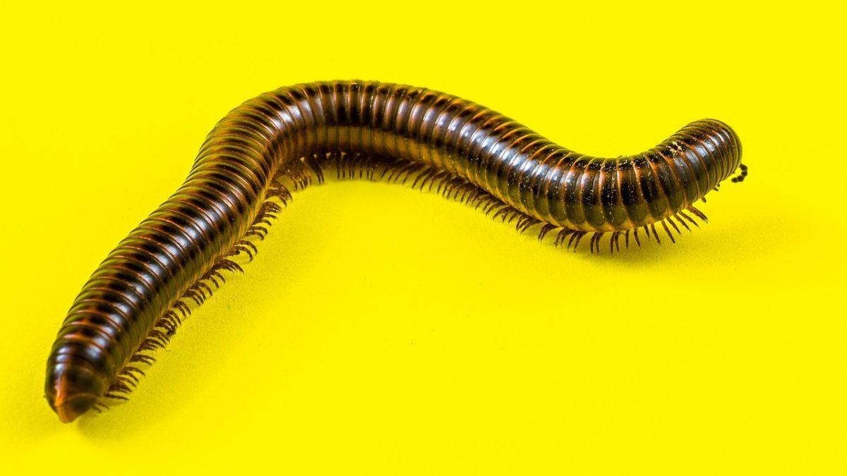 Pesticidi: tutti i danni che provocano agli invertebrati