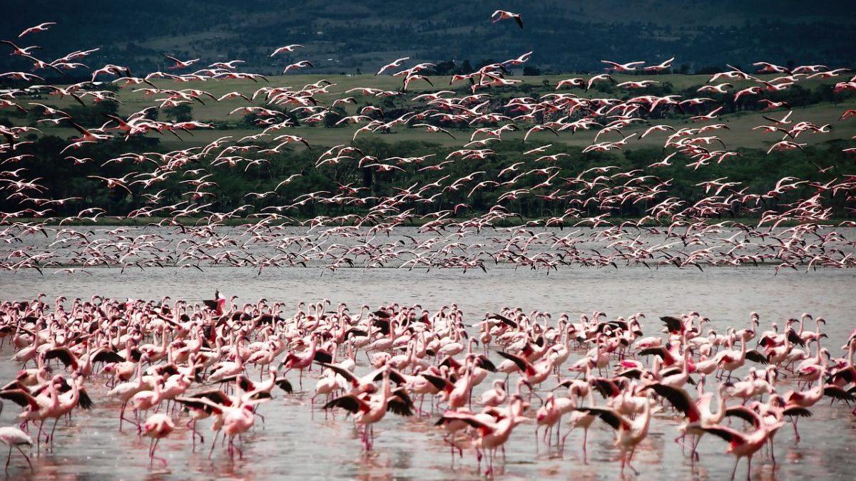Tutela della biodiversità: la Germania lancia il Legacy Landscapes Fund
