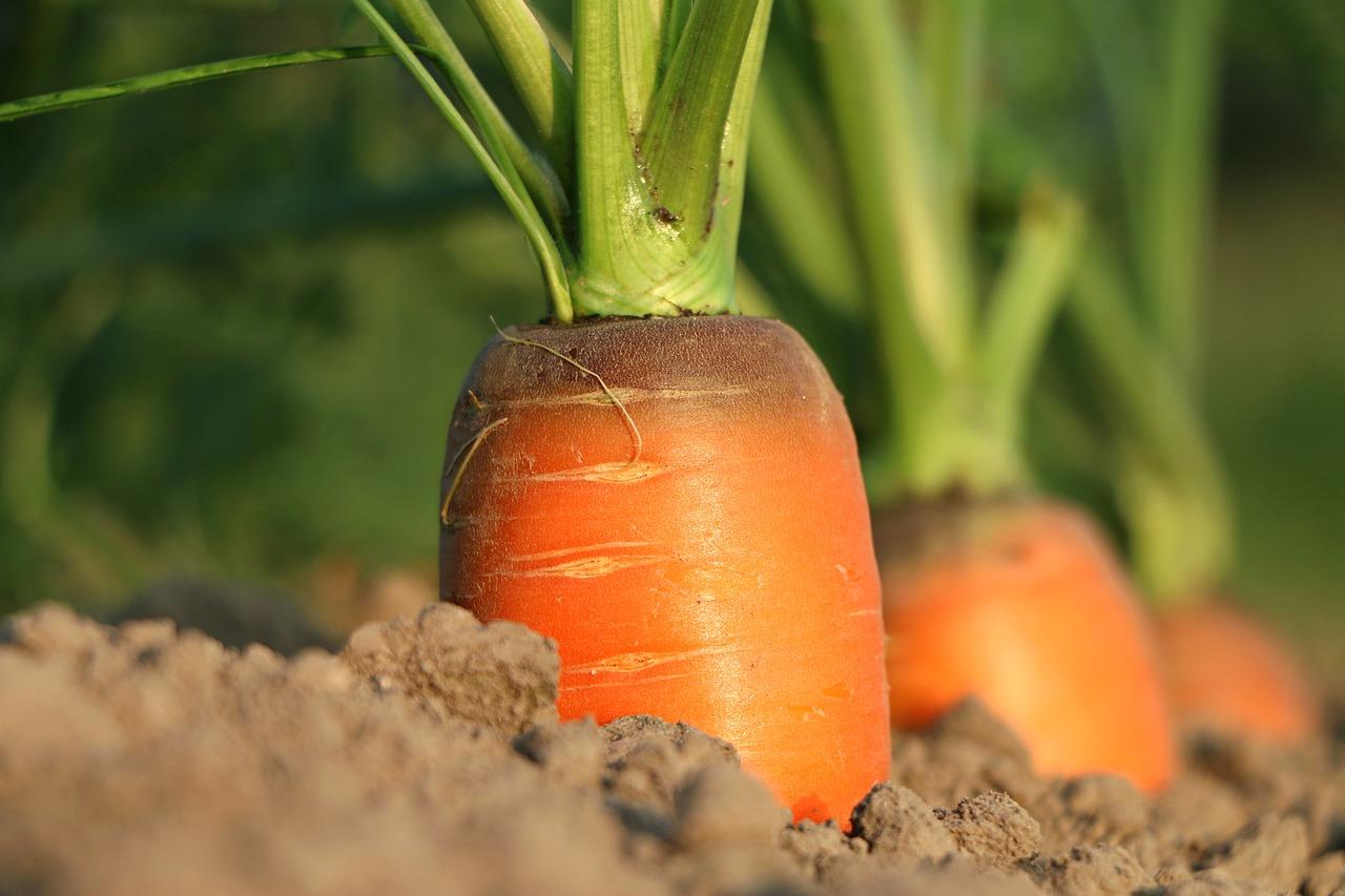 pnrr agricoltura