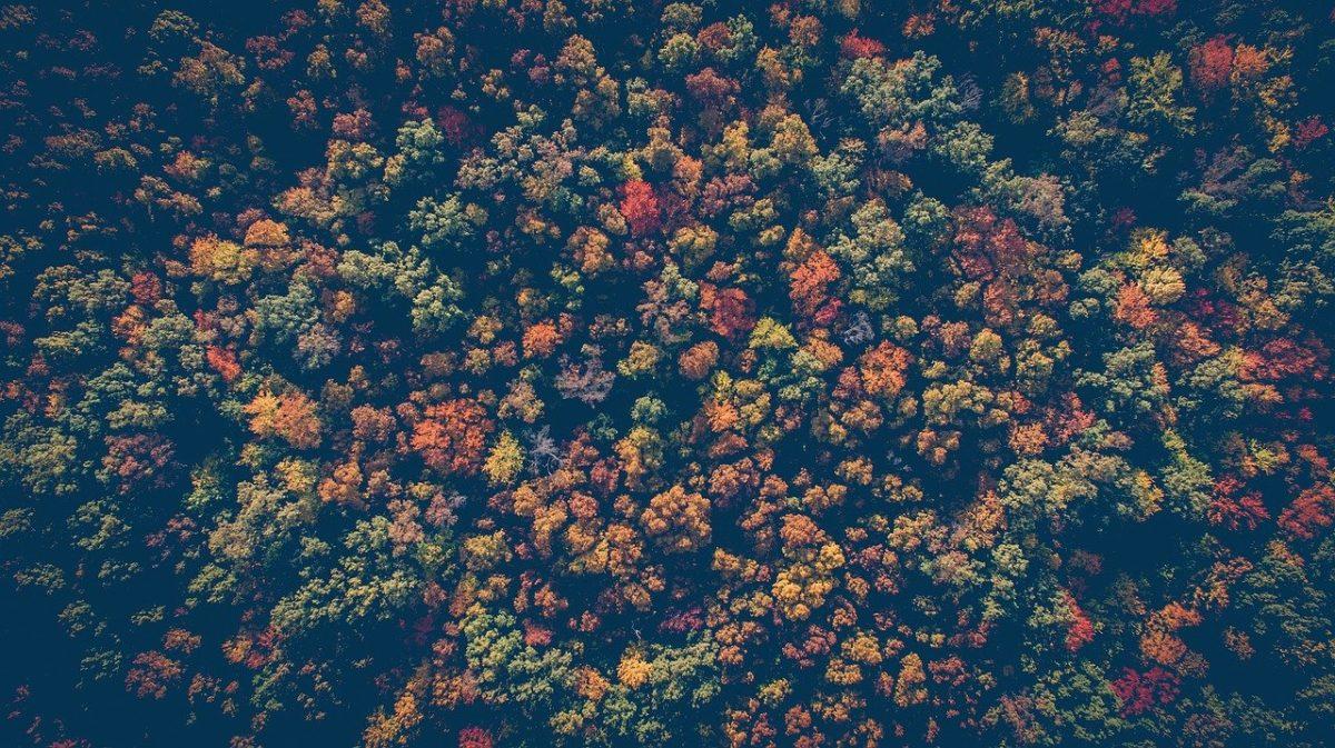 Rigenerazione delle foreste: il WWF spiega dove funziona e perché