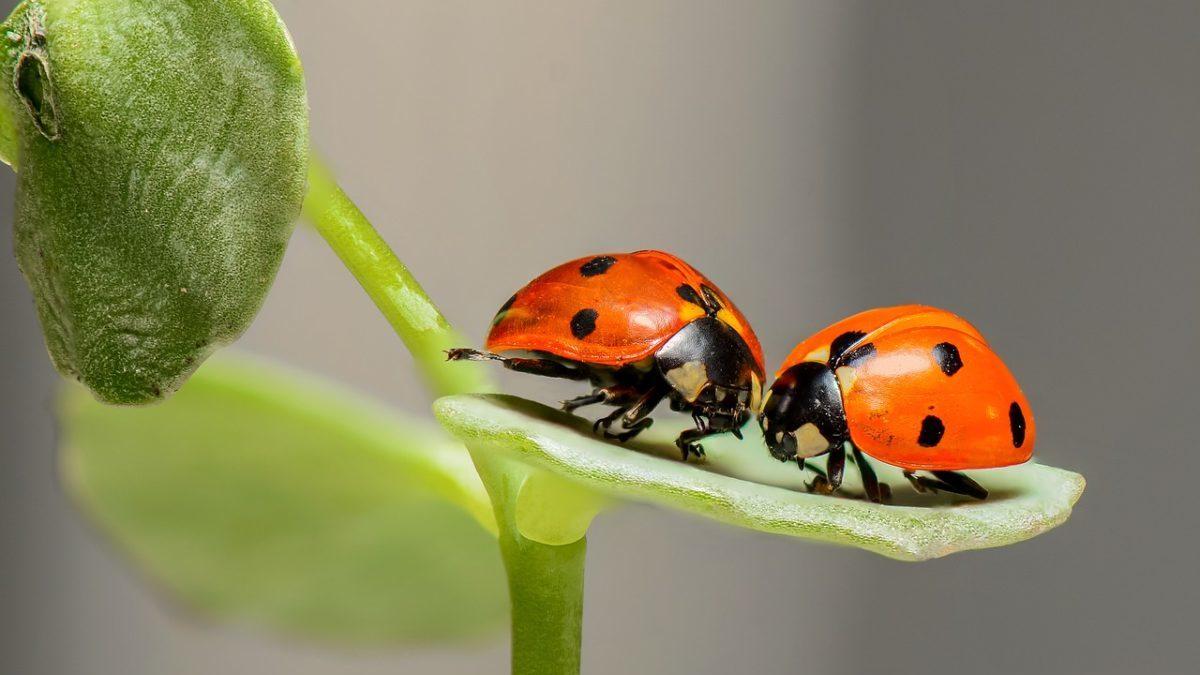 Biodiversità: i danni del sistema economico sulla diversità biologica