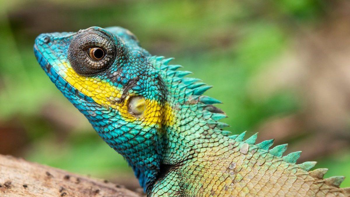 Aree naturali protette: luci e ombre della tutela globale della biodiversità