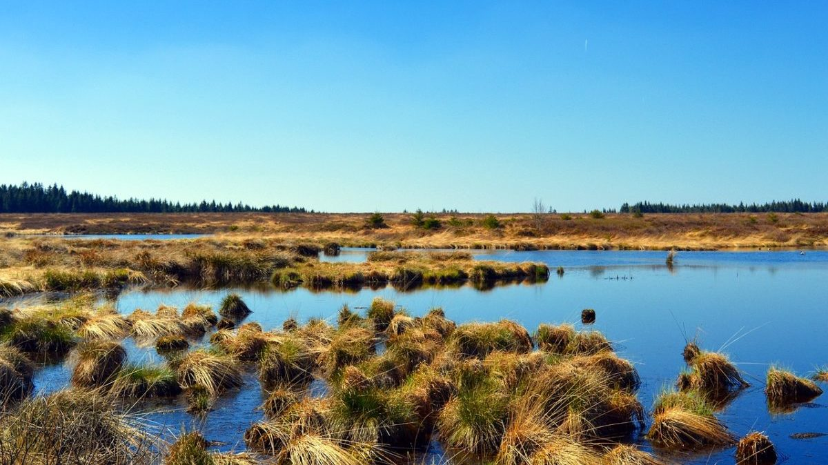 Tutela della biodiversità: Unep, servono 4.000 miliardi entro il 2050