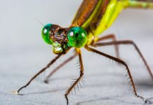 Scomparsa degli insetti: il ruolo delle dighe
