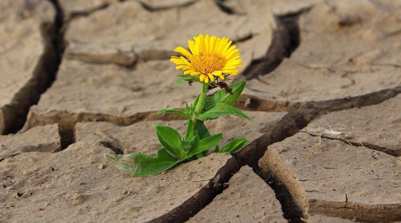 Giornata mondiale contro desertificazione e siccità