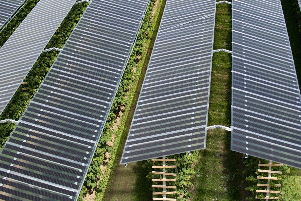 impianto agri fotovoltaico
