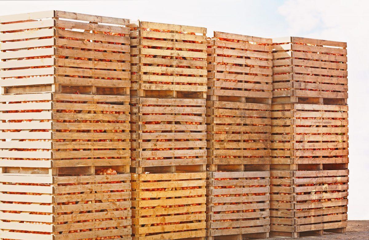 Mercati all'ingrosso, perni della sicurezza alimentare