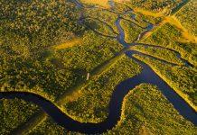 Foresta amazzonica: ufficiale, ormai è un emettitore netto di CO2