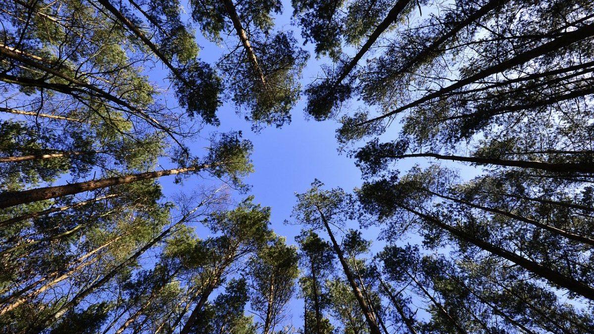 Mercato volontario del carbonio: gli UK lanciano l'iniziativa globale