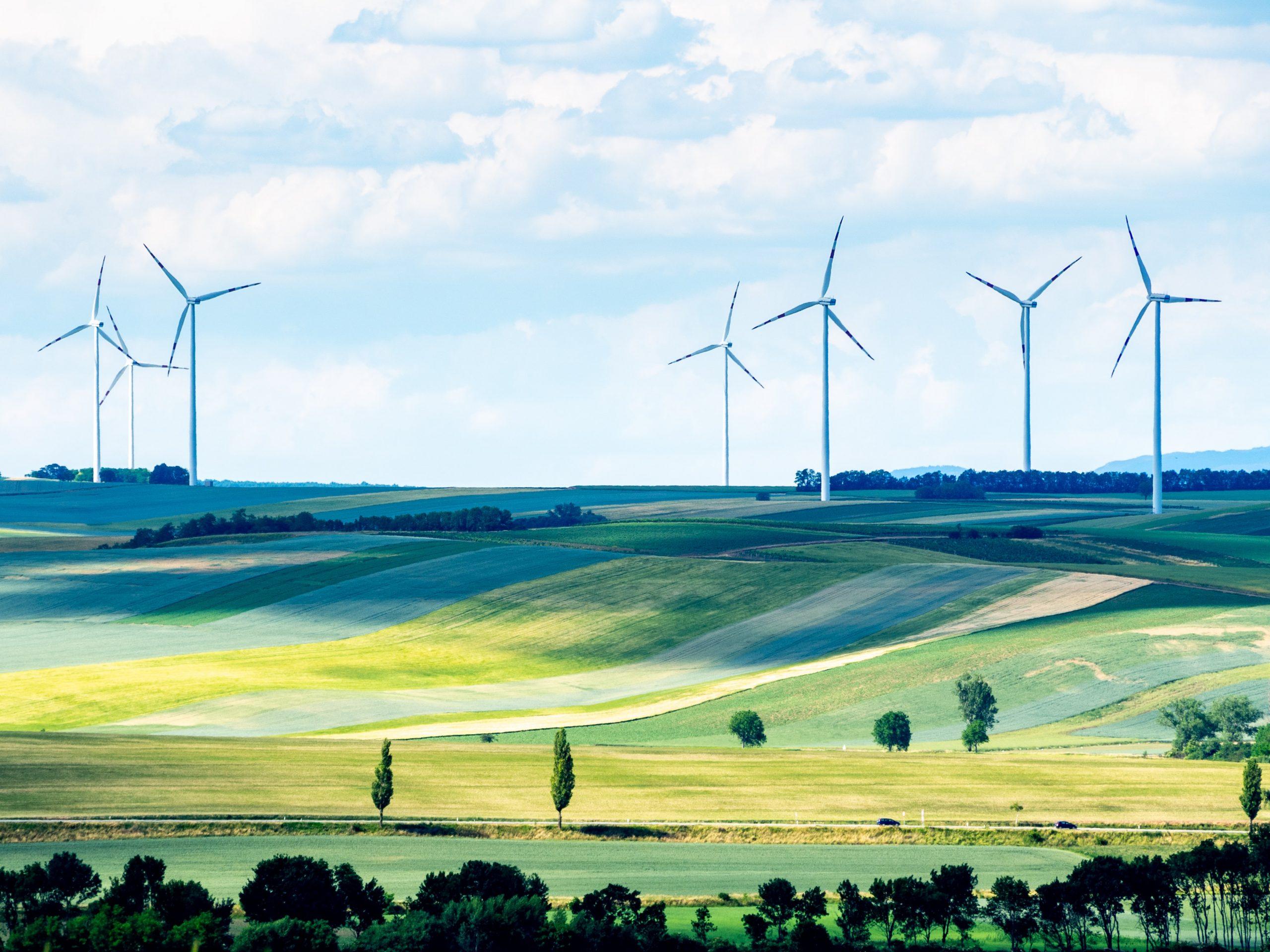 rinnovabili alberi