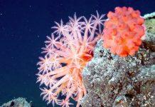 Grande Barriera Corallina: l'Australia la spunta, niente declassamento