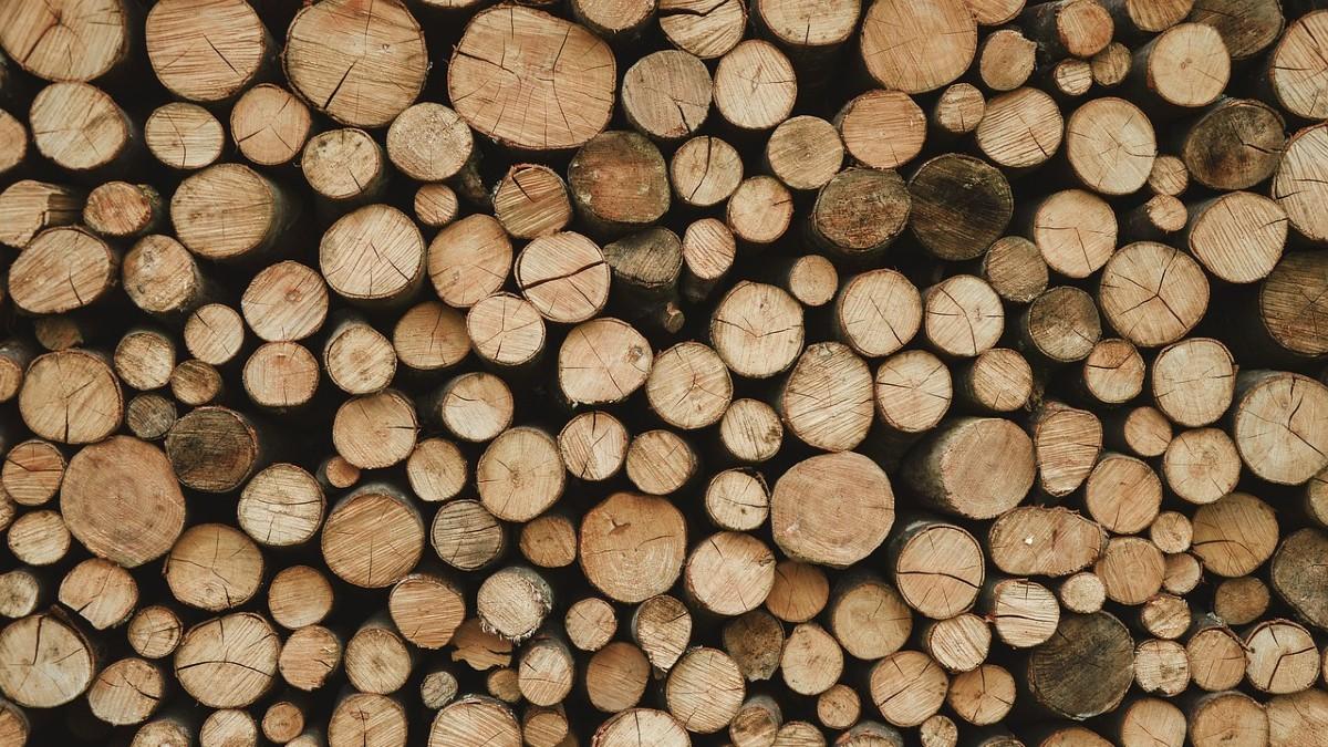 Disboscamento dell'Amazzonia: persi 10mila km2 nell'ultimo anno
