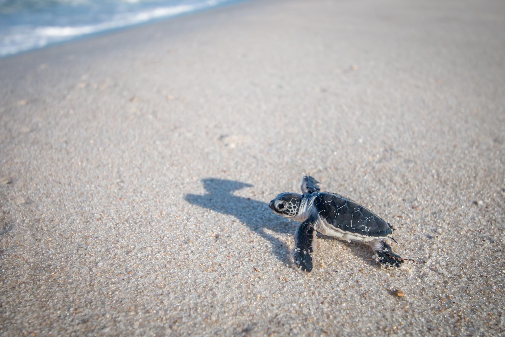 plastica tartarughe