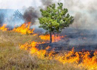 emergenza incendi
