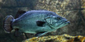 I rischi dell'acquacoltura per la salute umana e ambientale