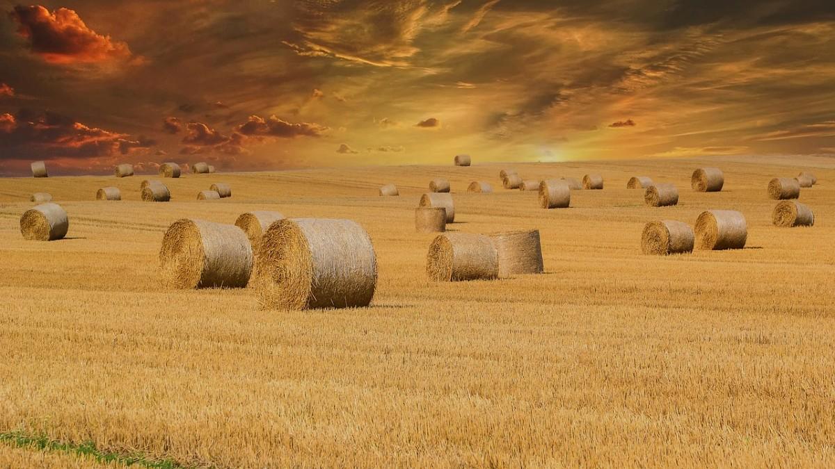 Strategia Farm to Fork: ecco come migliorarla, secondo l'Europarlamento