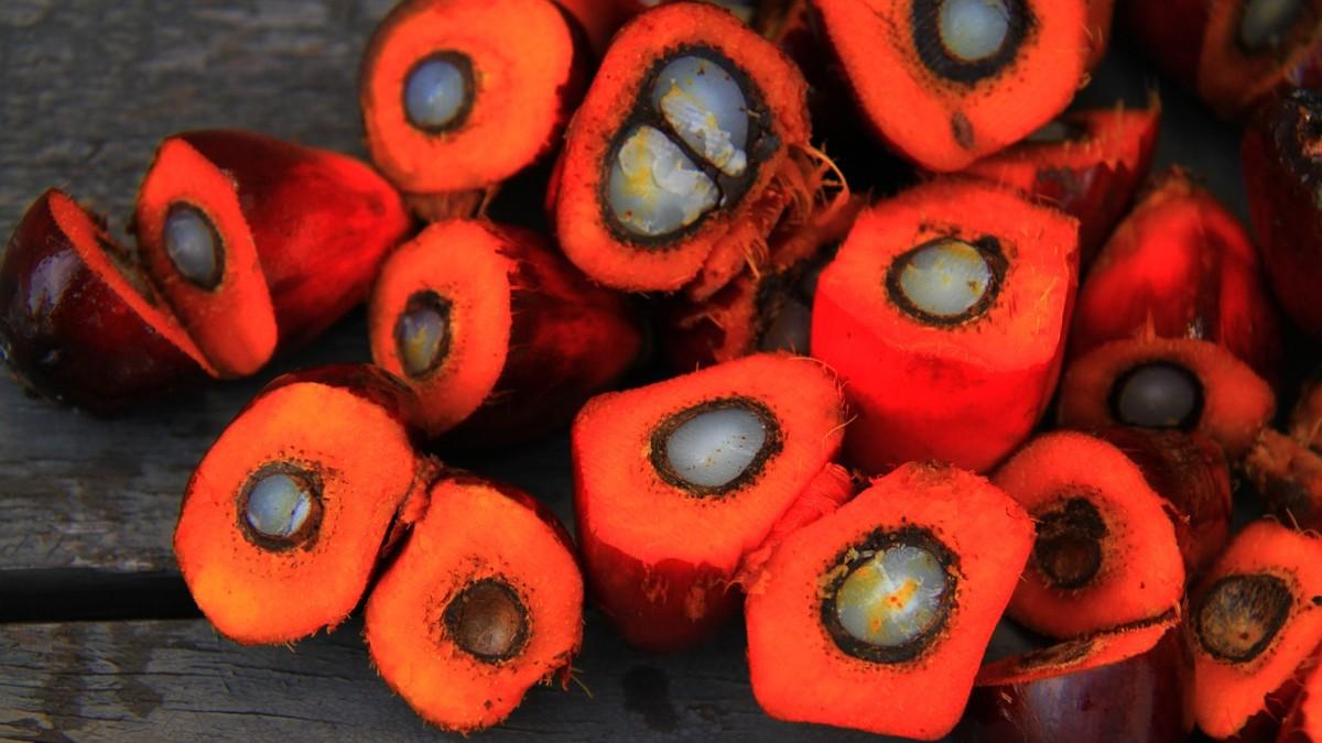 Olio di palma: l'Indonesia toglie la moratoria del 2018