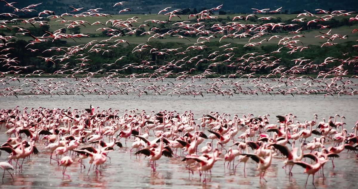 Tutela della biodiversità: il vertice IUCN lancia l'allarme rosso