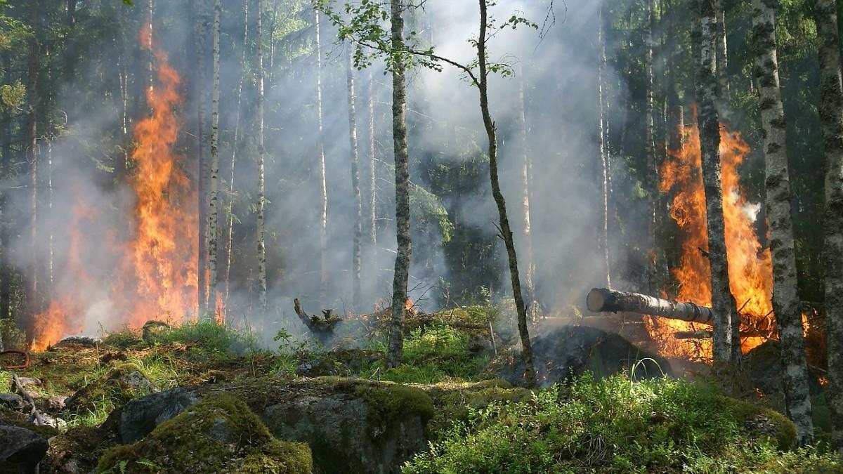 Incendi in Siberia: nel 2021 è già record assoluto