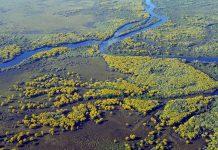 Disboscamento: tutelare l'80% dell'Amazzonia entro il 2025