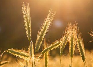 Food Systems Summit 2021: verso un IPCC del cibo?