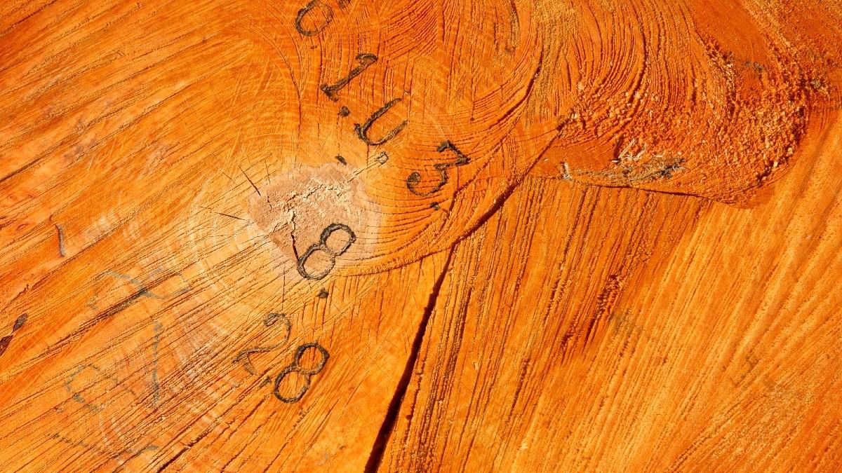 Deforestazione in Amazzonia: in 35 anni persi 75 mln di ettari