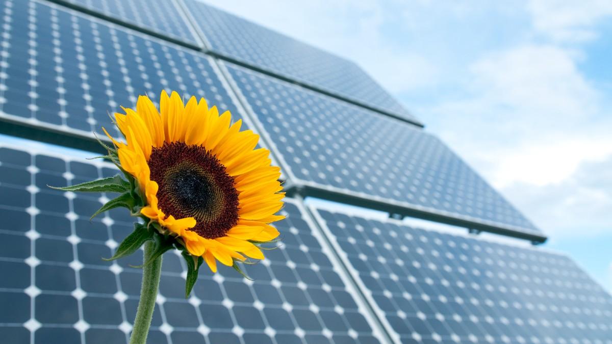 Agrivoltaico: un possibile modello di sviluppo per contribuire alla transizione energetica