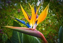 Vertice sulla biodiversità